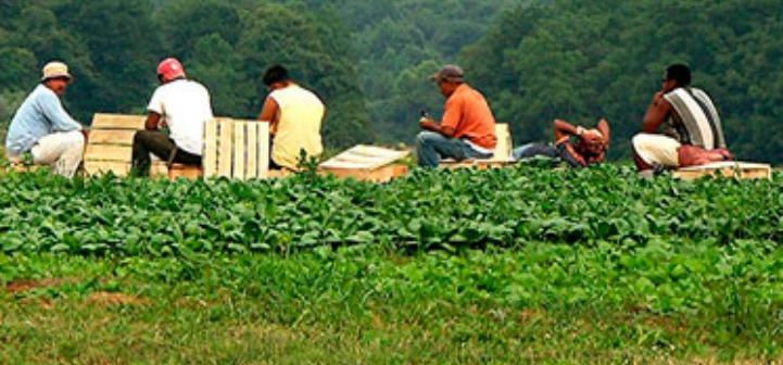 migrant farm workers photo